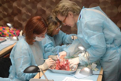 TP 7 : Chirurgies parodontales