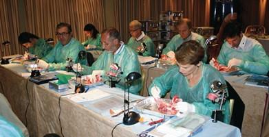 Cycle court en Implantologie 1er degré 2016